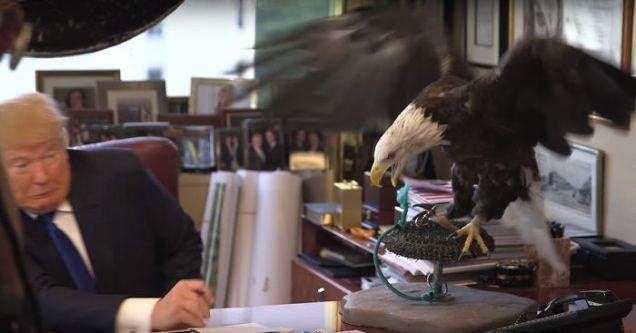 bald-eagle-attacks-trump-photo-shoot-time-magazine-fb1__700